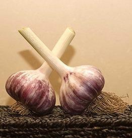 Two bulbs of Baba Franchuk's garlic.