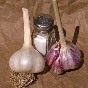 Two bulbs of Yugoslavian garlic.